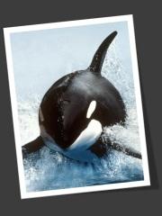 orca_frame